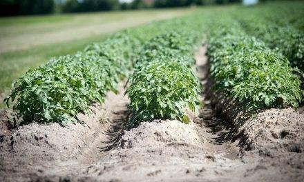 Activadores de suelo Tradecorp para mejorar el rendimiento de los cultivos