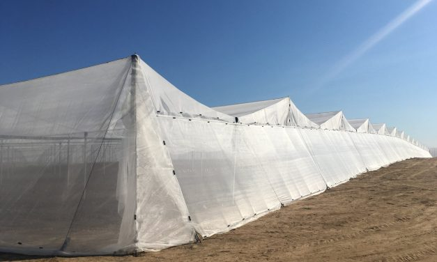 Net-House de Arrigoni para proteger el invernadero de insectos