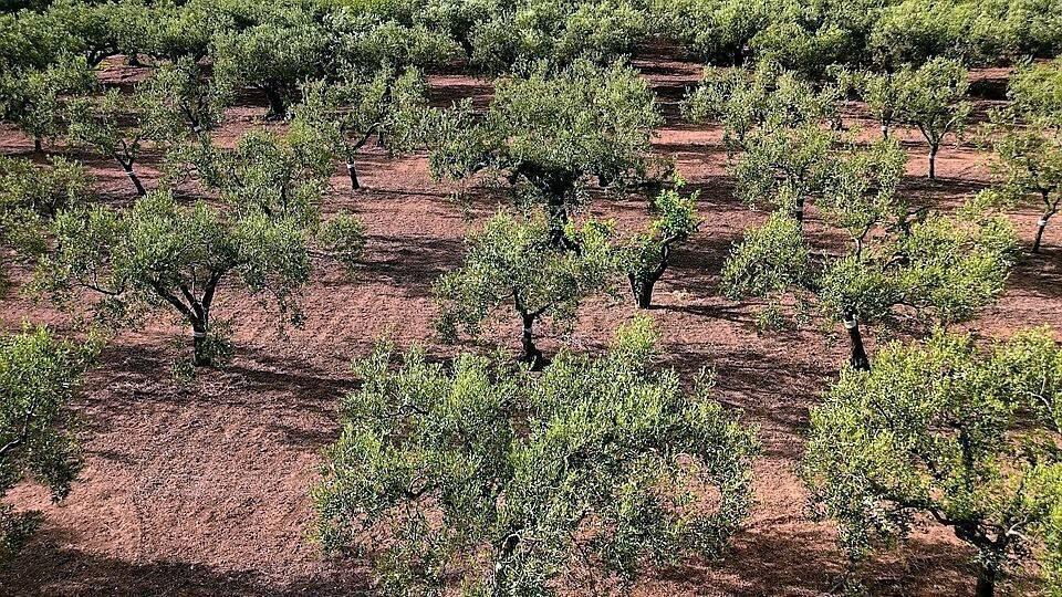 Sapec Agro participa en una jornada técnica sobre nuevas tendencias y abonado de restitución de la cubierta vegetal en olivar