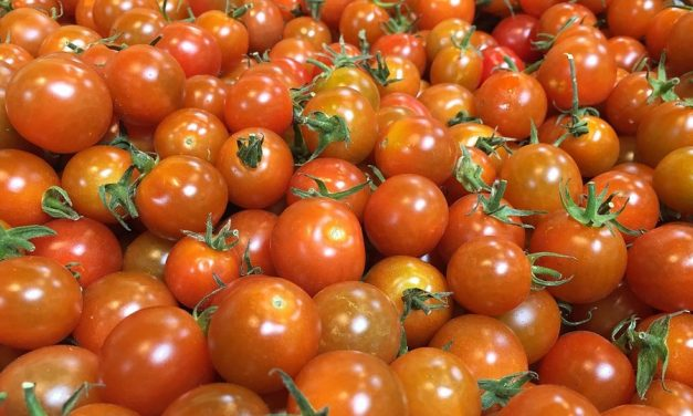 Envasado de tomates de ULMA Packaging