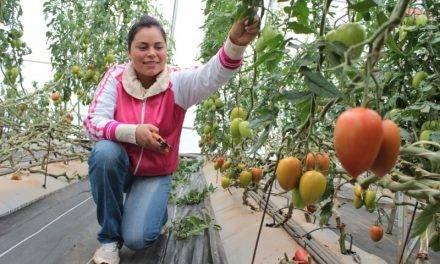 Biotecnología agrícola en Querétaro