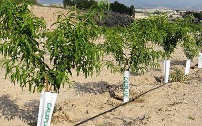 ¿Interesado en plantar frutales, almendros, pistachos o patrón de ucb?¿Ha realizado ya su pedido?