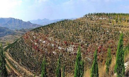 En China se toman la reforestación en serio