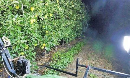 Agerpix estima automáticamente la producción en plantaciones frutales
