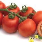 Gamas de tomates con novedades en Fitó
