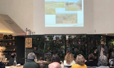 Pensamientos y otras novedades en ornamentales en «Syntech Plant»
