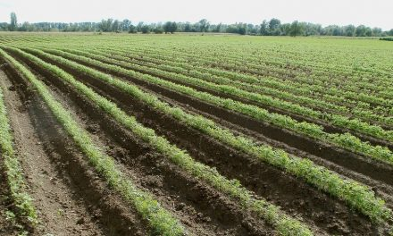 Humic substances (HA, FA) improves carrots plant growth characters