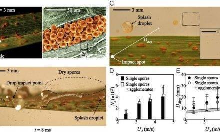 Así es como la lluvia propaga enfermedades de una planta a otra