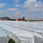 Agrotextiles contra lluvias excesivas e insectos en el cultivo de cerezas