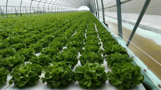 Resultado de imagen para hortalizas en sistemas flotantes