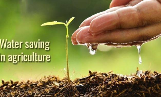Ahorro de agua en agricultura: cómo limitar el desperdicio de agua