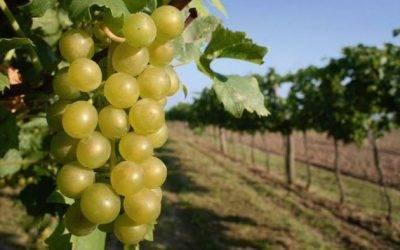 La familia Spyrit cuenta con dos nuevas soluciones anti mildiu para viña