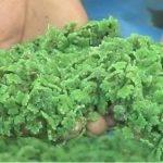 Sistema fijador de nitrógeno vetado por riesgos medioambientales