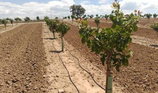 Sustratos, bandejas y malla antihierba para propagación de pistacho