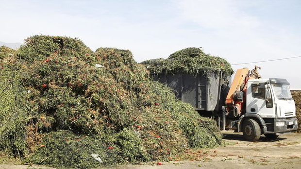 Ya se sabe cómo convertir residuos de paja de trigo en sustancias químicas ecológicas