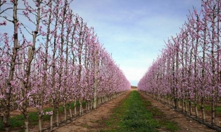 Intensificar la fruticultura