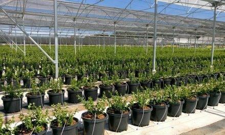 Las novedades para cultivos hidropónicos de Projar, en Infoagro