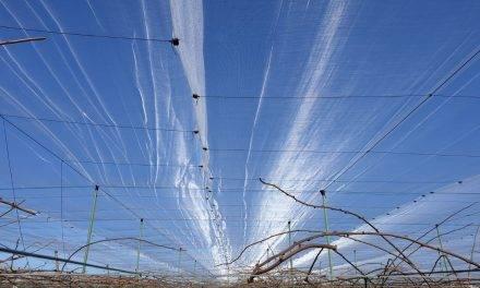 Soluciones Arrigoni para la protección contra el granizo