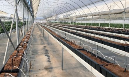 "Develop new ""California strawberry substrate trough"" for gutter growing"
