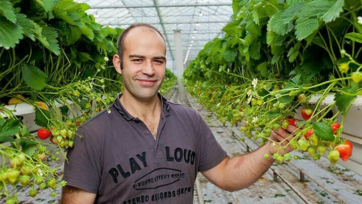 Recetas para crecer: Iluminación personalizada de cultivos