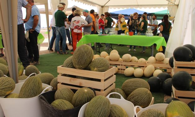 Variedades de melones de Fitó para todos los segmentos y ciclos de producción
