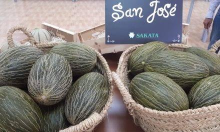 San José es un sorprendente melón temprano tipo piel de sapo de Sakata
