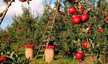 Genes que indican a las plantas las temperaturas apropiadas para crecer