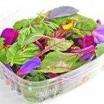 Las especialidades en la horticultura