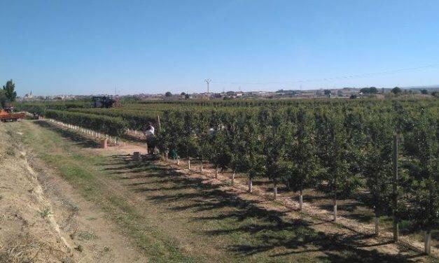 La producción ecológica de la almendra: un proyecto demostrativo del IRTA