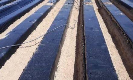 Plásticos TIF en la desinfestación de suelos con 1,3 dicloropropeno + cloropicrina para la fresa