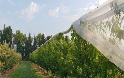 Red antigranizo para proteger cultivos de kiwis, cerezas y frutos pequeños