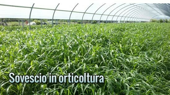 Técnica del abono verde: Cómo puede implementarla en la horticultura?