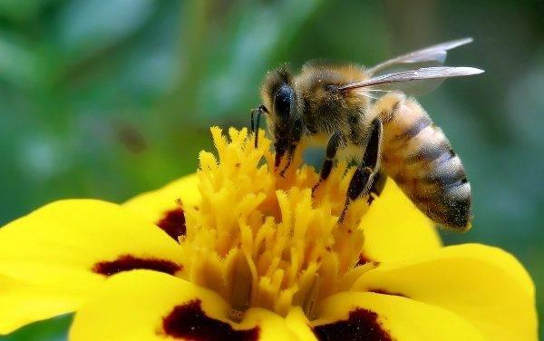 El neonicotinoides, un insecticida que mata a especies polinizadoras