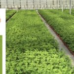 New Report Forecasts Production and Markets for Ornamentals to 2030