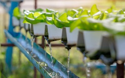 Quality of irrigation water: How to measure conductivity?