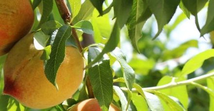 Suterra productor de  feromonas agrícolas estara en Fruit Attraction