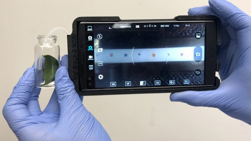 Portable Technology Sniffs Out Plant Disease in the Field