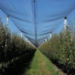 Arrigoni: Mallas protectoras de manzanas y peras