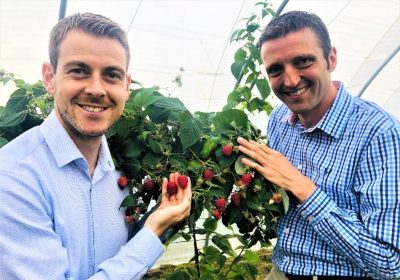 Global Plant Genetics and James Hutton Showcase New Raspberry Selections