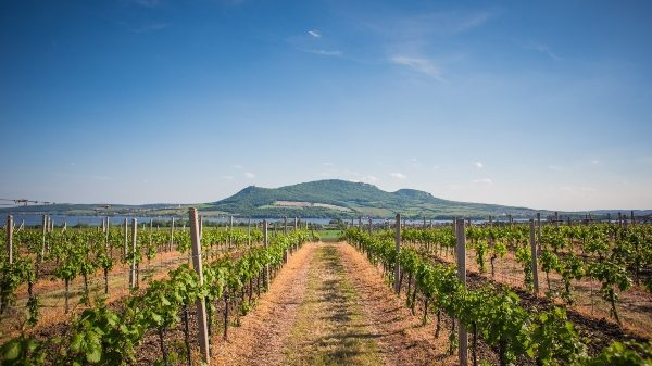 Fruit Attraction: Rovensa presenta la agricultura equilibrada