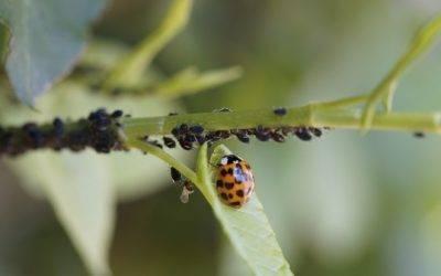 España: Lanzan guía sobre plantas que ayudan al control de plagas