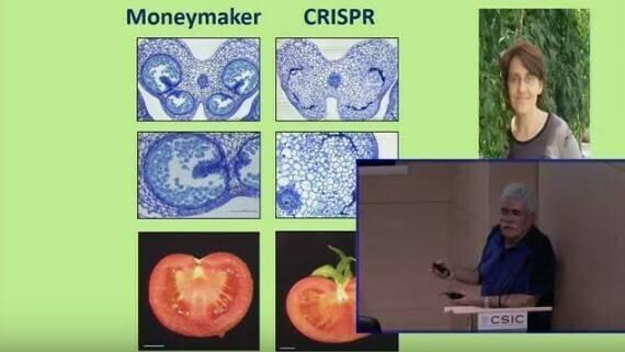 El sistema CRISPR aporta herramientas para la sostenibilidad