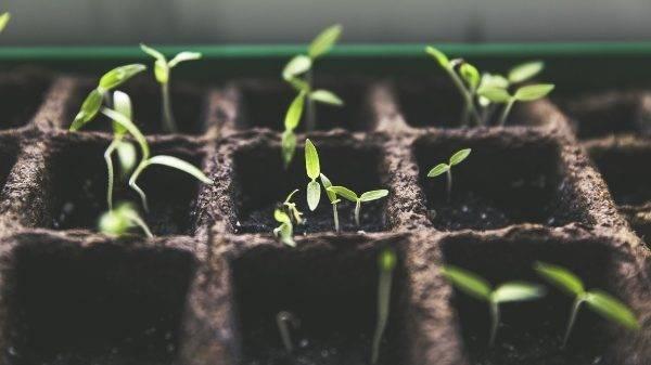 España: Universidades festejan la semana de la mejora vegetal