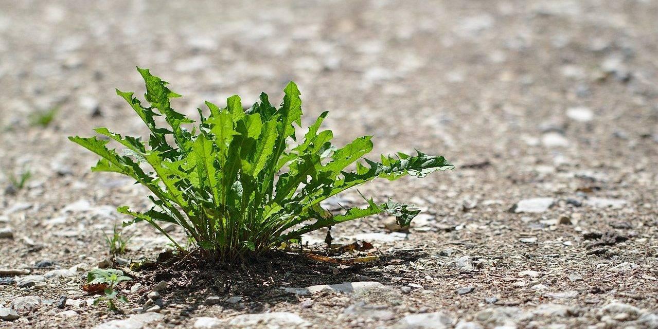 Función en una proteína relevante para la resistencia a la sequía de los cultivos