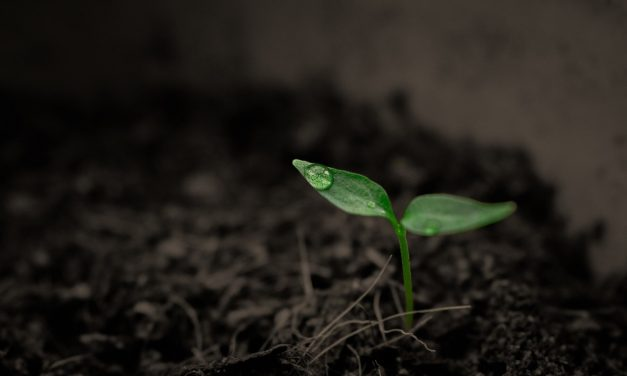 How multiple factors of climate change affect soil