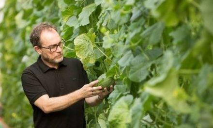 Investigación aporta herramientas para la mejora genética del melón