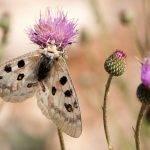 Los márgenes florales aumentan las poblaciones de insectos en entornos agrícolas