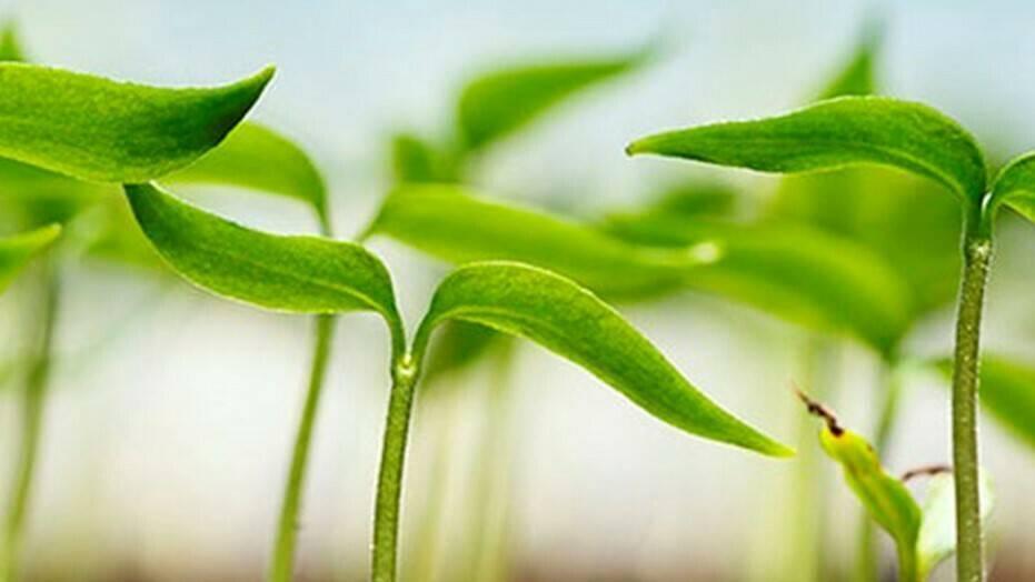 El congreso de los bioestimulantes agrícolas