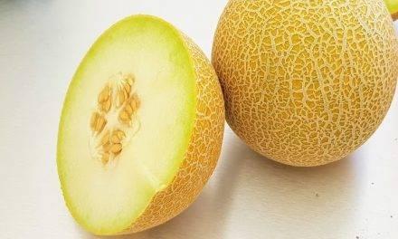Sidonia, un melón Galia de larga vida y la nueva sandía Rhiana