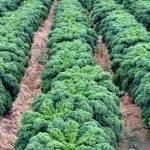 Influencia del cambio climático en zonas de la Meseta Norte de España